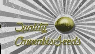 Quality cannabis seeds