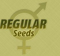 regular cannabis seed